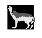 Transit Middle School logo